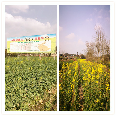 Daodao Quanliang Oil Co., Ltd.